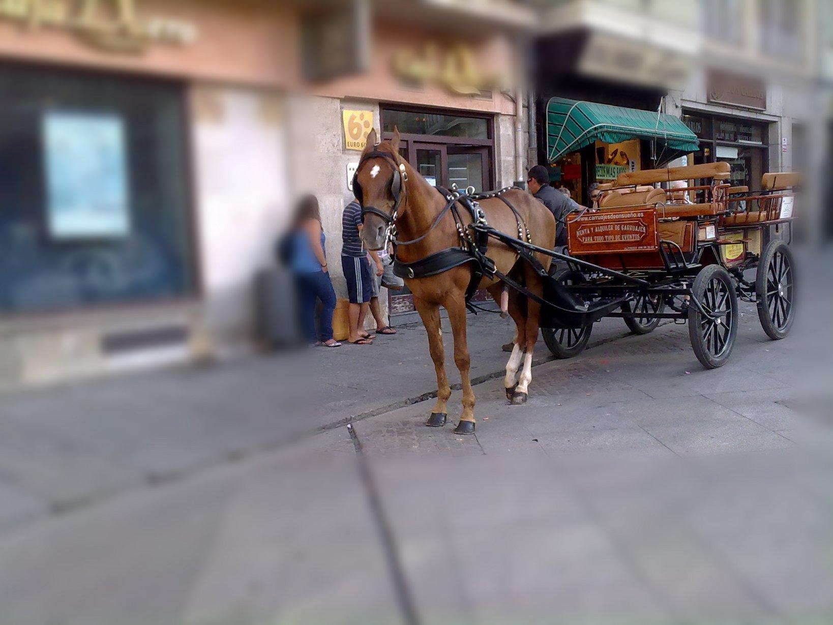 Un caballo bien dotado